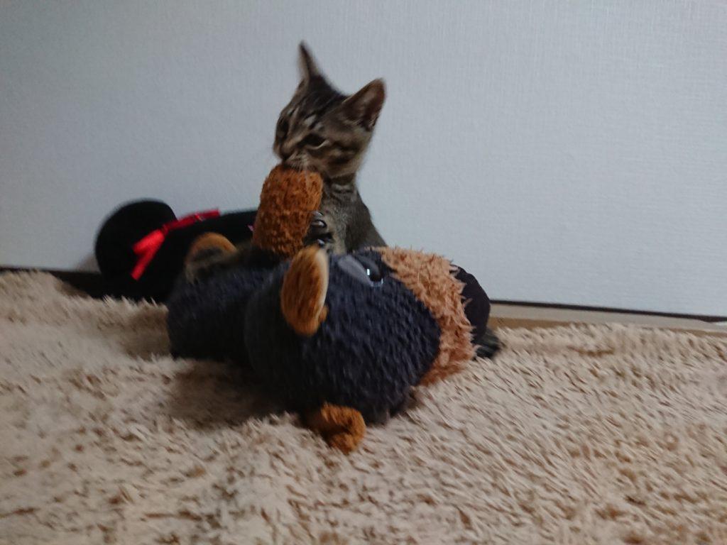 猫が急に暴れるのはいつまで続く?しつけで暴れなくなるの?