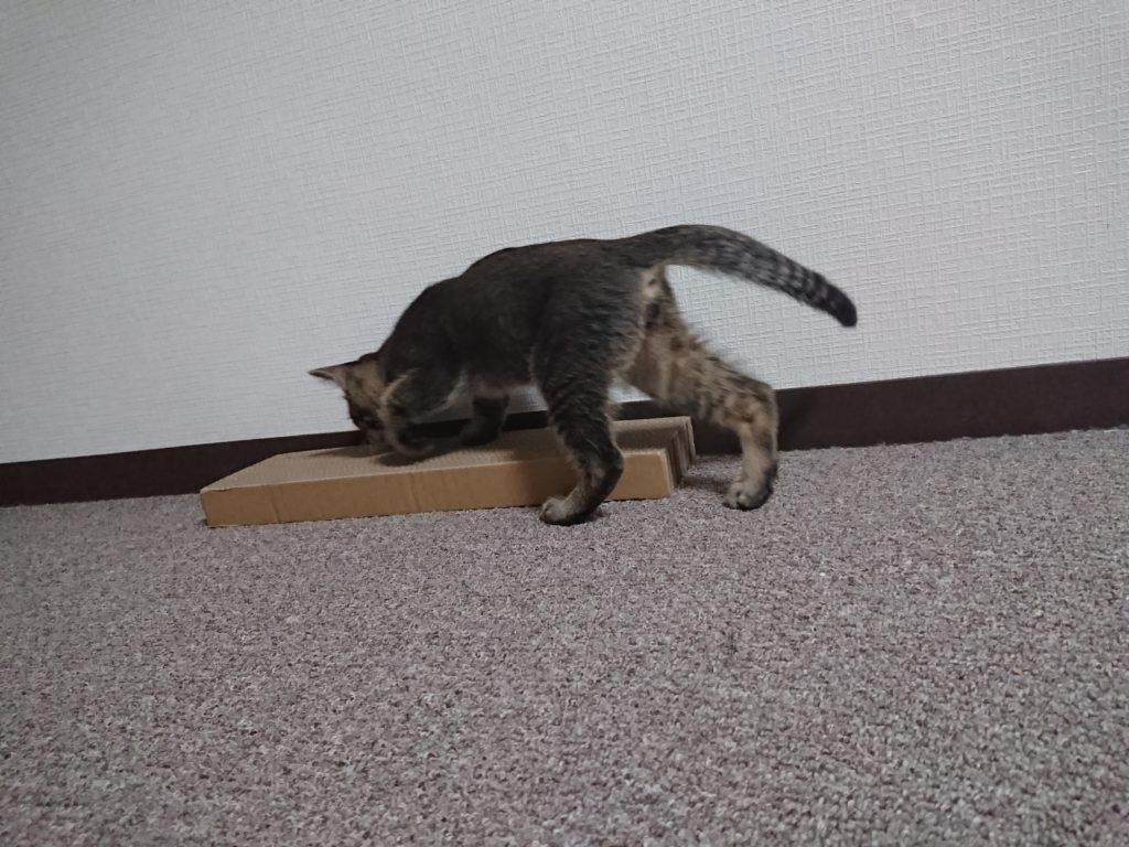 猫の爪とぎ対策はどうするのがいいの?理由に合わせてしつけをしよう!