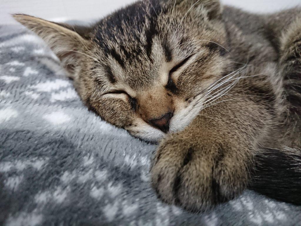 猫の寝る時間帯はいつ?睡眠時間が増えたり長いのには理由がある