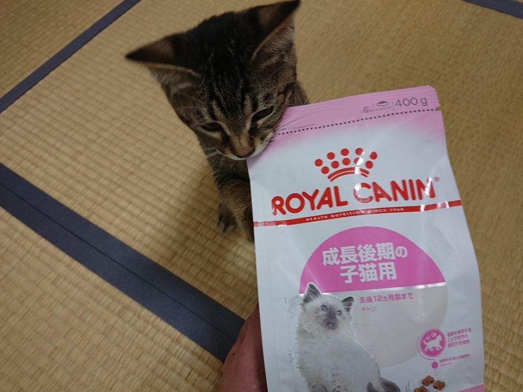 猫が餌を食べない・・何日まで平気なの?元気がない理由と対策を考える