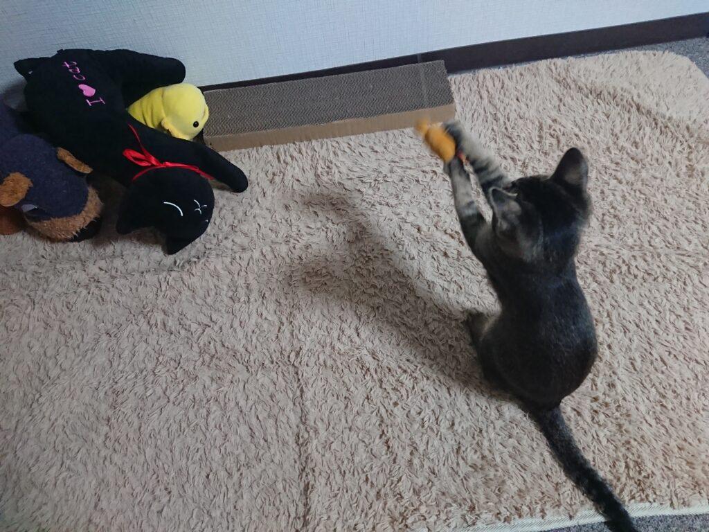 猫は遊ぶ時間が何分で満足できる?