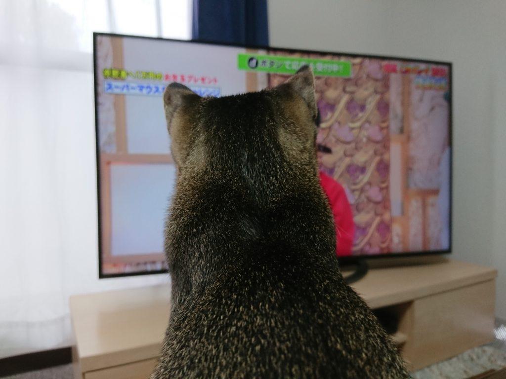 猫をマンションで室内飼いする時のポイントとは?実際に飼って気付いた点をご紹介