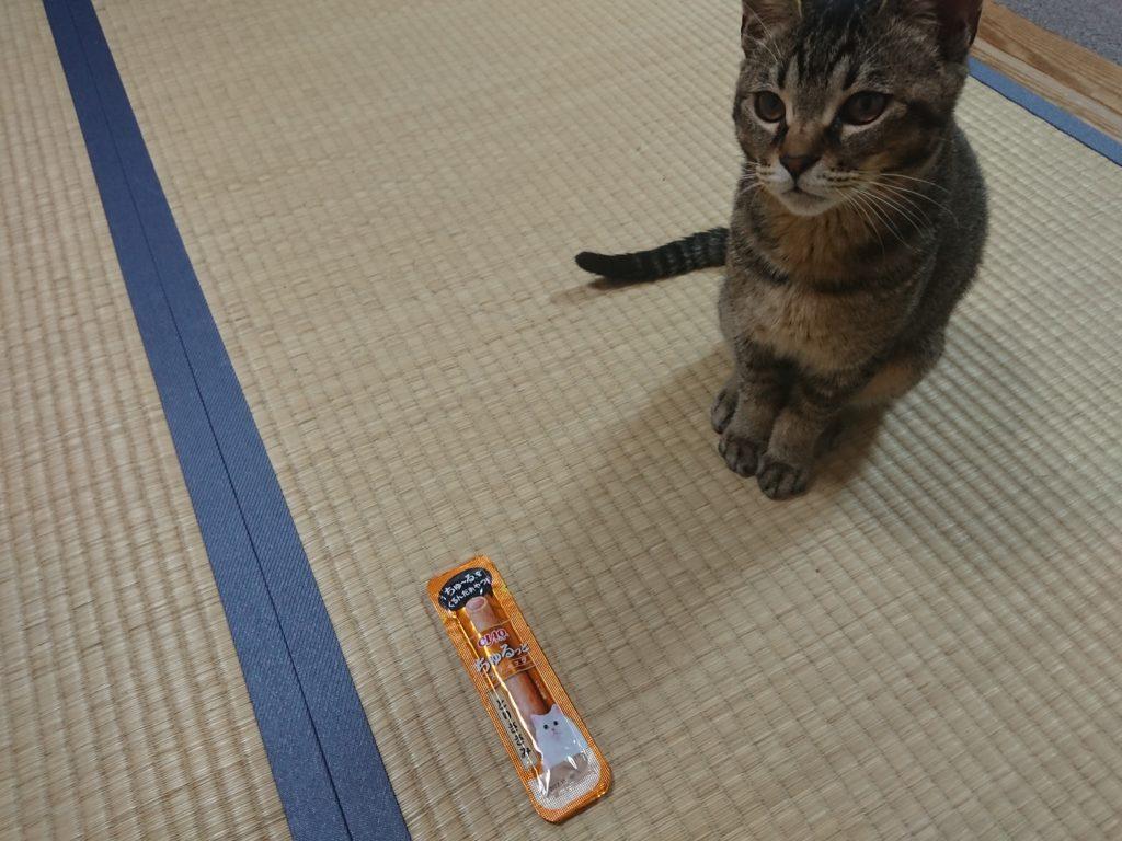 猫におやつを毎日与えるのは良くない?本当は与えなくても良いって本当?